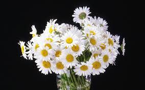 daisy boquet